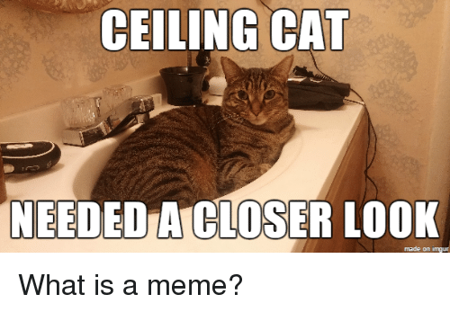 What Is A Memes: CEILING CAT  NEEDED  A CLOSER LOOK  made on inngur