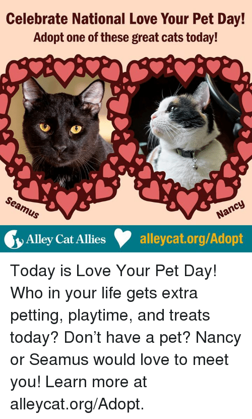 Cats, Life, and Love: Celebrate National Love Your Pet Day!  Adopt one of these great cats today!  Alleycat Allies  alleycat.org/Adopt Today is Love Your Pet Day! Who in your life gets extra petting, playtime, and treats today? Don't have a pet? Nancy or Seamus would love to meet you! Learn more at alleycat.org/Adopt.