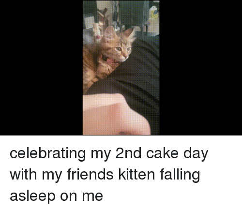 Friends, Cake, and Kitten: celebrating my 2nd cake day with my friends kitten falling asleep on me