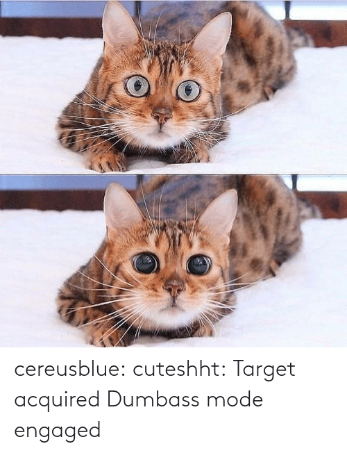 mode: cereusblue: cuteshht: Target acquired  Dumbass mode engaged