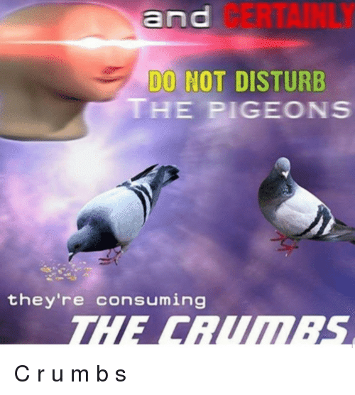 m&b: CERTAINLY  DO NOT DISTURB  THE PIGEONS  they're consuming C r u m b s