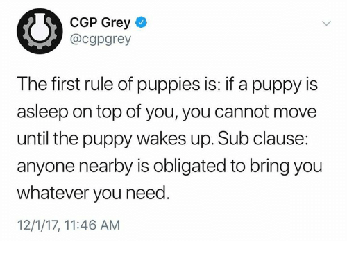 Puppies, Grey, and Puppy: CGP Grey  @cgpgrey  The first rule of puppies is: if a puppy is  asleep on top of you, you cannot move  until the puppy wakes up. Sub clause  anyone nearby is obligated to bring you  whatever you need.  12/1/17, 11:46 AM