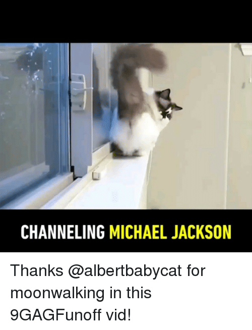 Memes, Michael Jackson, and Michael: CHANNELING MICHAEL JACKSON Thanks @albertbabycat for moonwalking in this 9GAGFunoff vid!