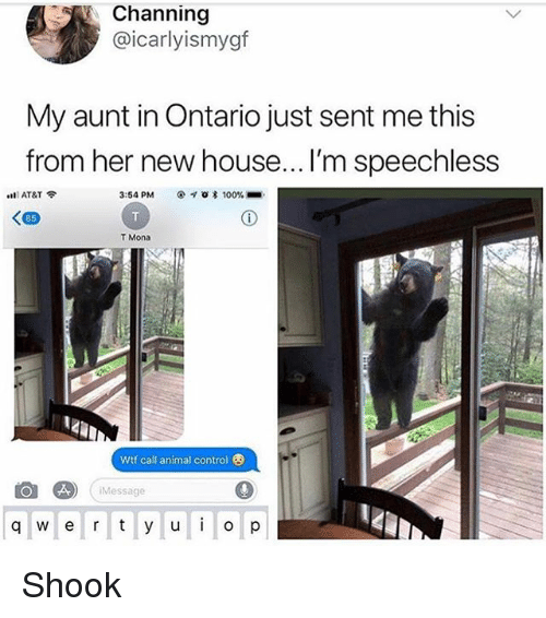 channing: Channing  @icarlyismygf  My aunt in Ontario just sent me this  from her new house... I'm speechless  ntl AT&T令  3:54 PM  * 100% ■  85  T Mona  Wtf call animal control  Message  q w e r y u p Shook