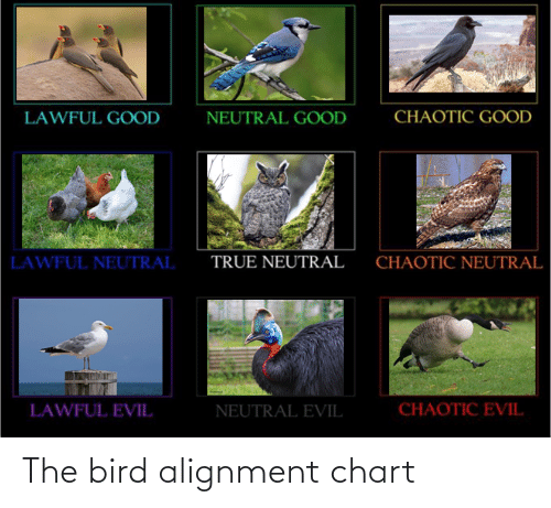 Chaotic Good: CHAOTIC GOOD  NEUTRAL GOOD  LAWFUL GOOD  TRUE NEUTRAL  CHAOTIC NEUTRAL  LAWFUL NEUTRAL  CHAOTIC EVIL  LAWFUL EVIL  NEUTRAL EVIL The bird alignment chart