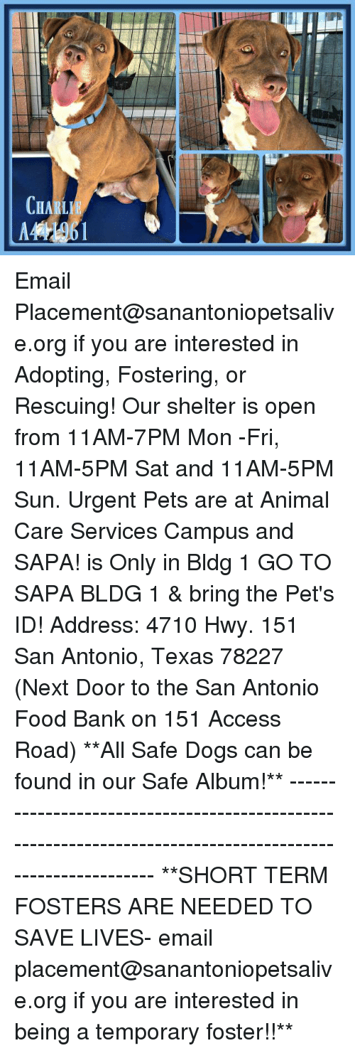 Dogs, Food, and Memes: CHARL Email Placement@sanantoniopetsalive.org if you are interested in Adopting, Fostering, or Rescuing!  Our shelter is open from 11AM-7PM Mon -Fri, 11AM-5PM Sat and 11AM-5PM Sun.  Urgent Pets are at Animal Care Services Campus and SAPA! is Only in Bldg 1 GO TO SAPA BLDG 1 & bring the Pet's ID! Address: 4710 Hwy. 151 San Antonio, Texas 78227 (Next Door to the San Antonio Food Bank on 151 Access Road)  **All Safe Dogs can be found in our Safe Album!** ---------------------------------------------------------------------------------------------------------- **SHORT TERM FOSTERS ARE NEEDED TO SAVE LIVES- email placement@sanantoniopetsalive.org if you are interested in being a temporary foster!!**