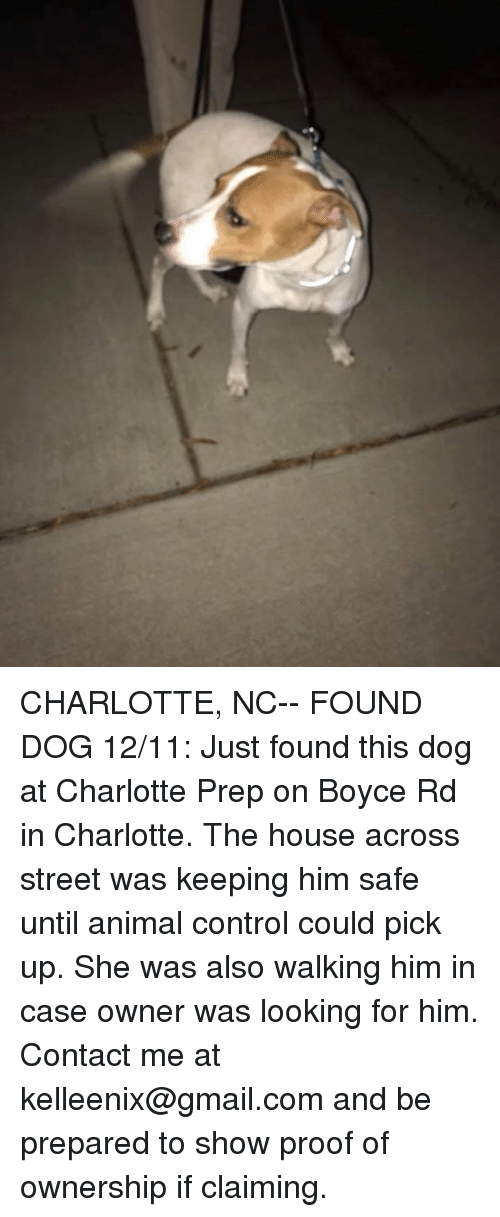 Charlotte nc found dog 1211 just found this dog at for The dog house charlotte nc