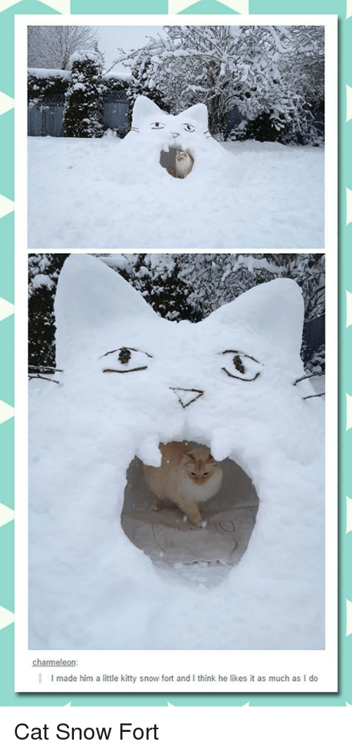 charmeleon: charmeleon:  |  I made him a little kitty snow fort and I think he likes it as much as I do <p>Cat Snow Fort</p>