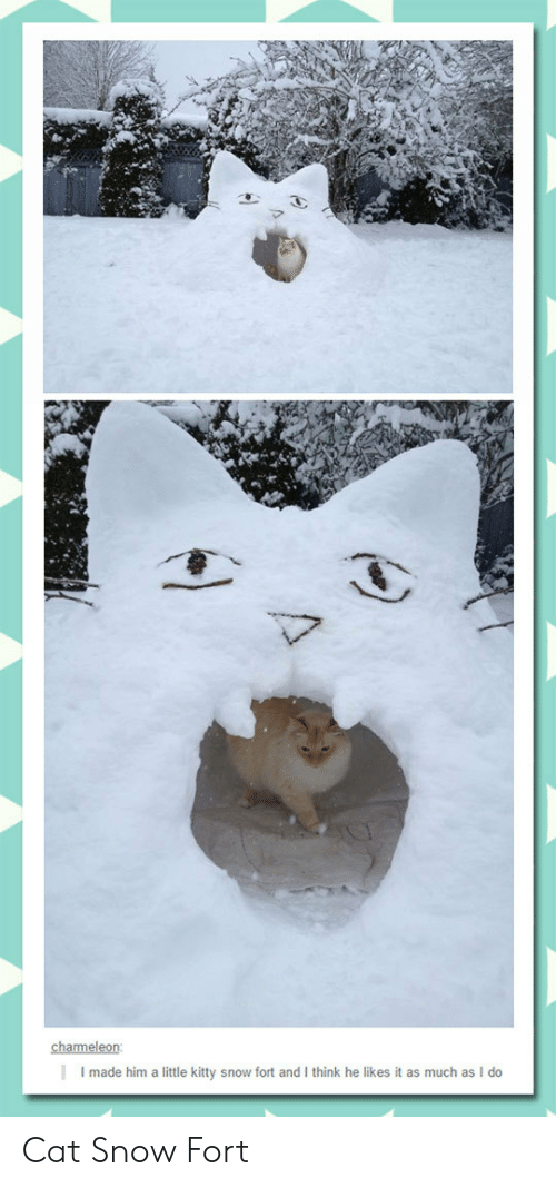 charmeleon: charmeleon  Imade him a little kitty snow fort and I think he likes it as much as I do Cat Snow Fort