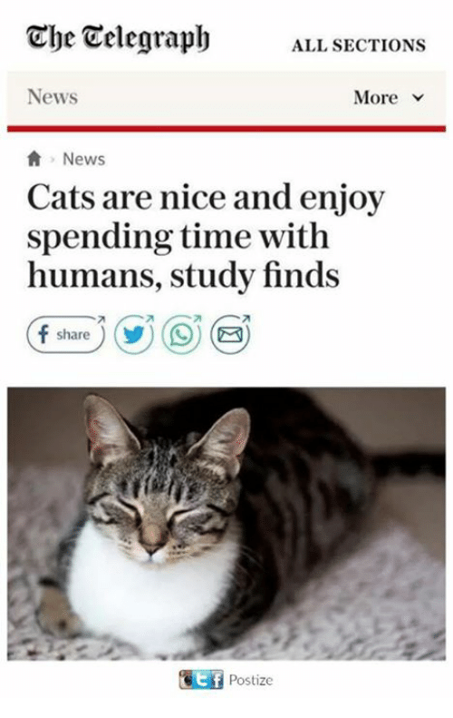 Cats, Memes, and News: Che Telegraph  ALL SECTIONS  News  News  Cats are nice and enjoy  spending time with  humans, study finds  share  Postize