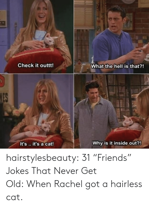 """Jokes: Check it outtt!  What the hell is that?!  It's.. it's a cat!  Why is it inside out?! hairstylesbeauty:   31 """"Friends"""" Jokes That Never Get Old:When Rachel got a hairless cat."""