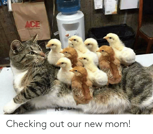 Our: Checking out our new mom!