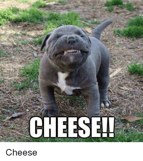 Memes, 🤖, and Cheese: CHEESE!! Cheese