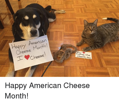Memes, American, and Happy: Cheese Month!  T Cheese  cheese, too Happy American Cheese Month!