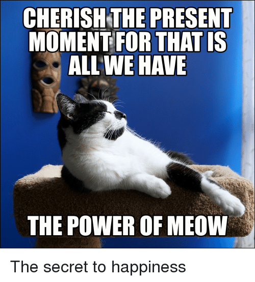 LOLcats: CHERISHTHE PRESENT  MOMENT FOR THAT IS  ALL WE HAVE  THE POWER OF MEOW The secret to happiness