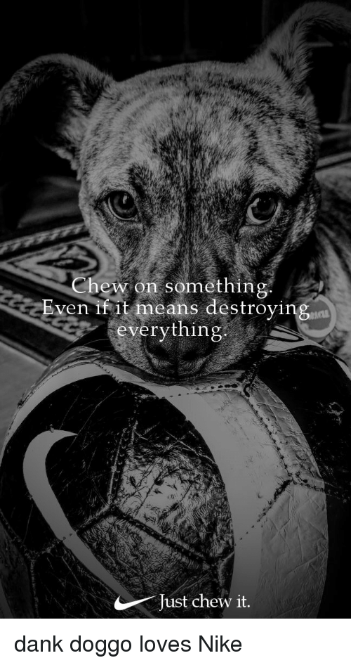 Dank Doggo: Chew on something  Bven it means destroying  everything  ACT  Just chew it.
