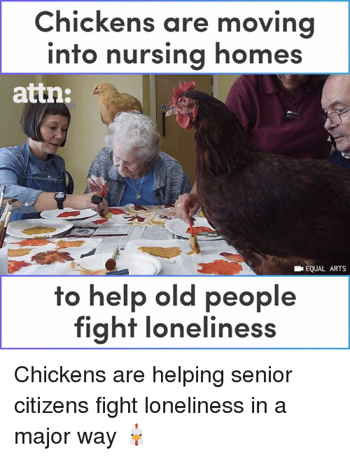 Memes, Old People, and Help: Chickens are movina  into nursing homes  attn:  EQUAL ARTS  to help old people  fight loneliness Chickens are helping senior citizens fight loneliness in a major way 🐔