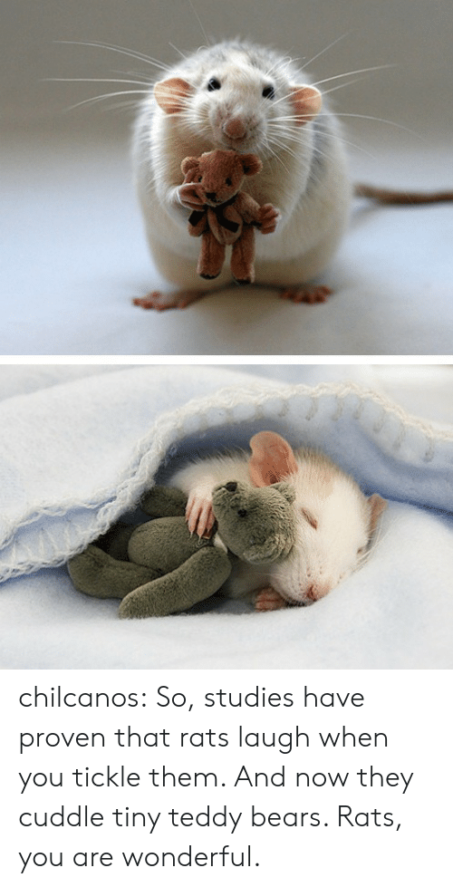 You Are Wonderful: chilcanos: So, studies have proven that rats laugh when you tickle them. And now they cuddle tiny teddy bears. Rats, you are wonderful.