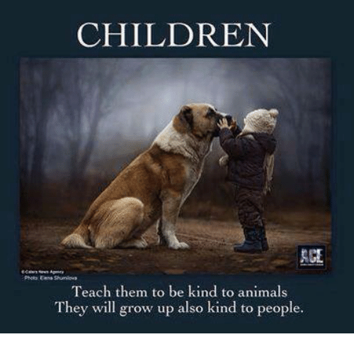 be kind to animals essay