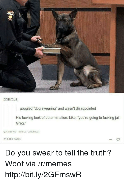 """Tell The Truth: chillimus  googled """"dog swearing"""" and wasn't disappointed  His fucking look of determination. Like, """"you're going to fucking jail  Greg.""""  E chillimus Source serfukucat  719,081 notes Do you swear to tell the truth? Woof via /r/memes http://bit.ly/2GFmswR"""