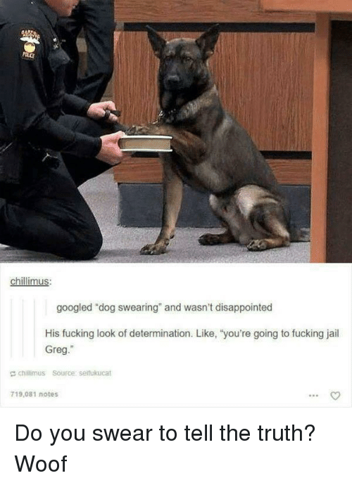 """Tell The Truth: chillimus  googled """"dog swearing"""" and wasn't disappointed  His fucking look of determination. Like, """"you're going to fucking jail  Greg.""""  E chillimus Source serfukucat  719,081 notes Do you swear to tell the truth? Woof"""