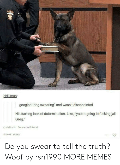 """Tell The Truth: chillimus  googled """"dog swearing"""" and wasn't disappointed  His fucking look of determination. Like, """"you're going to fucking jail  Greg.""""  E chillimus Source serfukucat  719,081 notes Do you swear to tell the truth? Woof by rsn1990 MORE MEMES"""