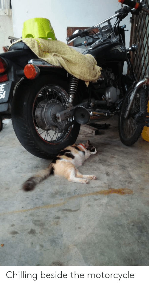 Motorcycle: Chilling beside the motorcycle