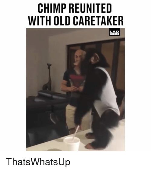 Chimp: CHIMP REUNITED  WITH OLD CARETAKER  LAD  BIBLE ThatsWhatsUp