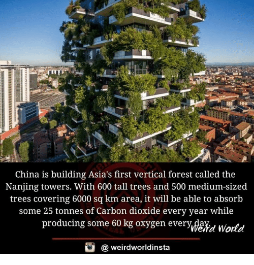 Memes, China, and Oxygen: China is building Asia's first vertical forest called the  Nanjing towers. With 600 tall trees and 500 medium-sized  trees covering 6000 sq km area, it will be able to absorb  some 25 tonnes of Carbon dioxide every year while  producing some 60 kg oxygen every da  world  weirdworldinsta  a