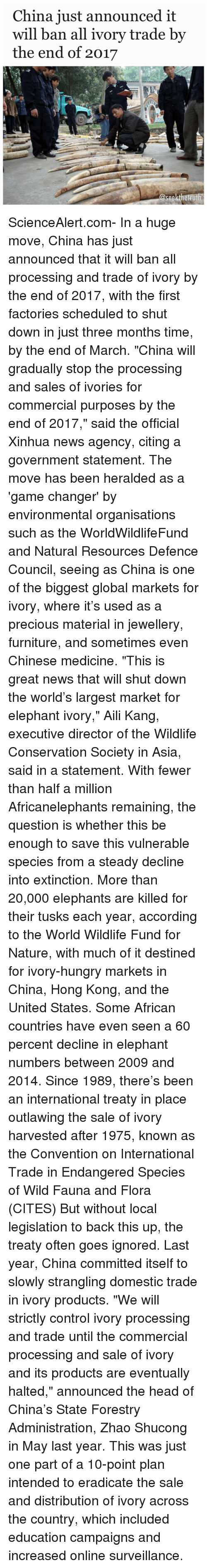 "Tusk: China just announced it  will ban all ivory trade by  the end of 2017  @seekthetruth ScienceAlert.com- In a huge move, China has just announced that it will ban all processing and trade of ivory by the end of 2017, with the first factories scheduled to shut down in just three months time, by the end of March. ""China will gradually stop the processing and sales of ivories for commercial purposes by the end of 2017,"" said the official Xinhua news agency, citing a government statement. The move has been heralded as a 'game changer' by environmental organisations such as the WorldWildlifeFund and Natural Resources Defence Council, seeing as China is one of the biggest global markets for ivory, where it's used as a precious material in jewellery, furniture, and sometimes even Chinese medicine. ""This is great news that will shut down the world's largest market for elephant ivory,"" Aili Kang, executive director of the Wildlife Conservation Society in Asia, said in a statement. With fewer than half a million Africanelephants remaining, the question is whether this be enough to save this vulnerable species from a steady decline into extinction. More than 20,000 elephants are killed for their tusks each year, according to the World Wildlife Fund for Nature, with much of it destined for ivory-hungry markets in China, Hong Kong, and the United States. Some African countries have even seen a 60 percent decline in elephant numbers between 2009 and 2014. Since 1989, there's been an international treaty in place outlawing the sale of ivory harvested after 1975, known as the Convention on International Trade in Endangered Species of Wild Fauna and Flora (CITES) But without local legislation to back this up, the treaty often goes ignored. Last year, China committed itself to slowly strangling domestic trade in ivory products. ""We will strictly control ivory processing and trade until the commercial processing and sale of ivory and its products are eventually halted,"" announced the head of China's State Forestry Administration, Zhao Shucong in May last year. This was just one part of a 10-point plan intended to eradicate the sale and distribution of ivory across the country, which included education campaigns and increased online surveillance."