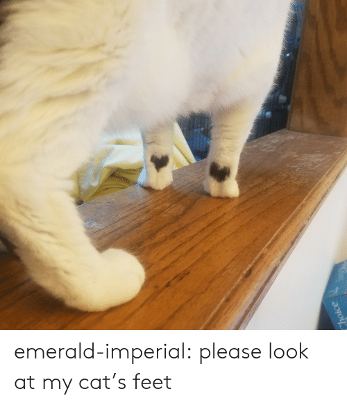 emerald: Choice emerald-imperial:  please look at my cat's feet