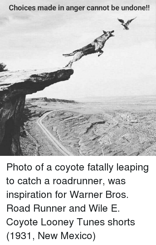 Looney Tunes: Choices made in anger cannot be undone!! Photo of a coyote fatally leaping to catch a roadrunner, was inspiration for Warner Bros. Road Runner and Wile E. Coyote Looney Tunes shorts (1931, New Mexico)