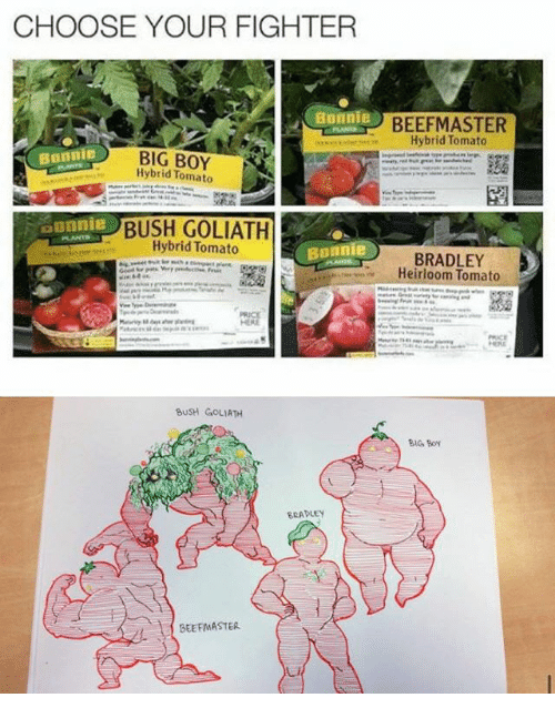 Beef, Beef, and Ironic: CHOOSE YOUR FIGHTER  Bonnie  Bunnie  BIG BOY  Hybrid Tomato  aonnie  BUSH GOLIATH  Hybrid Tomato  Bonnie  HERE  BUSH GOLIATH  BRADLEY  BEEFMASTER  BEEF MASTER  Hybrid Tomato  BRADLEY  Heirloom Tomato