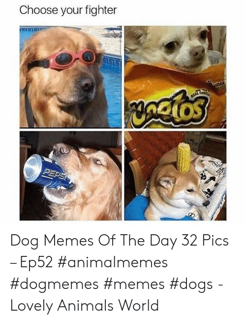 Memes Dogs: Choose your fighter  S157  yngios  PEPS Dog Memes Of The Day 32 Pics – Ep52 #animalmemes #dogmemes #memes #dogs - Lovely Animals World