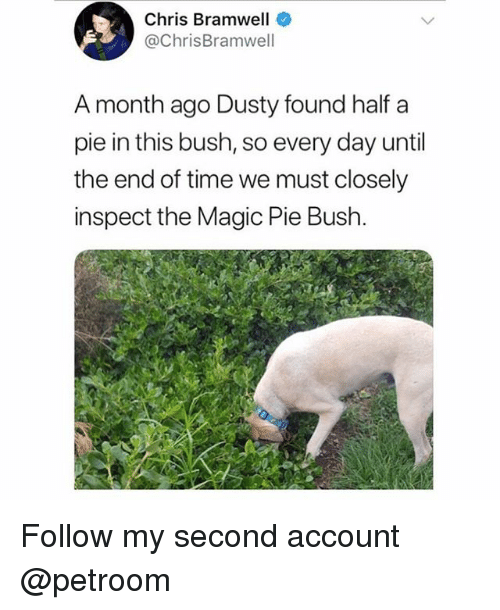 Funny, Magic, and Time: Chris Bramwell  @ChrisBramwell  A month ago Dusty found half a  pie in this bush, so every day until  the end of time we must closely  inspect the Magic Pie Bush Follow my second account @petroom