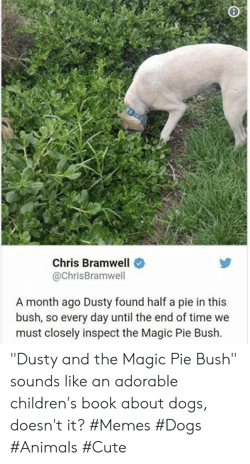 "It Memes: Chris Bramwell  @ChrisBramwell  A month ago Dusty found half a pie in this  bush, so every day until the end of time we  must closely inspect the Magic Pie Bush. ""Dusty and the Magic Pie Bush"" sounds like an adorable children's book about dogs, doesn't it? #Memes #Dogs #Animals #Cute"