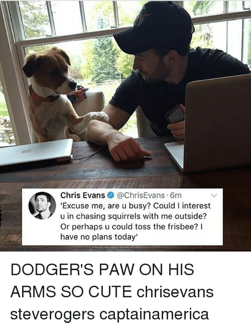 Pawing: Chris Evans@ChrisEvans 6m  'Excuse me, are u busy? Could I interest  u in chasing squirrels with me outside?  Or perhaps u could toss the frisbee? lI  have no plans today' DODGER'S PAW ON HIS ARMS SO CUTE chrisevans steverogers captainamerica
