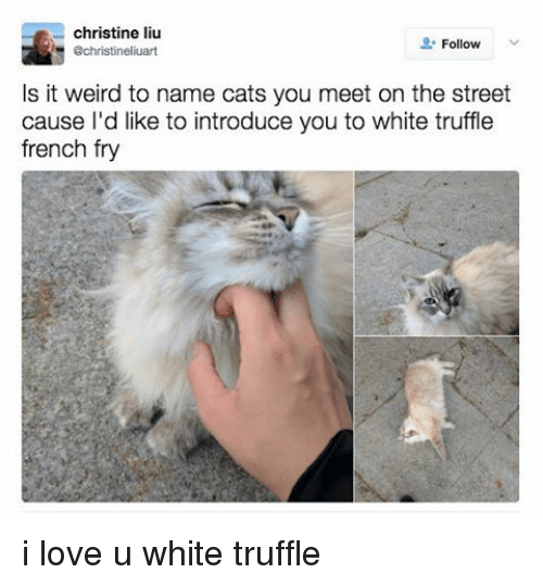 Cats, Love, and Weird: christine liu  Follow  achristineliuart  Is it weird to name cats you meet on the street  cause I'd like to introduce you to white truffle  french fry i love u white truffle