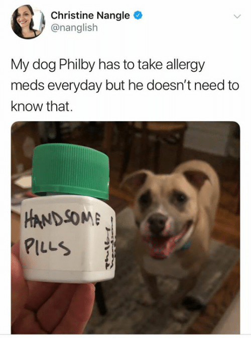 Dank, 🤖, and Dog: Christine Nangle  @nanglish  My dog Philby has to take allergy  meds everyday but he doesn't need to  know that.  HANDSOM  PILLS  P)