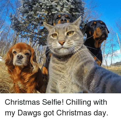 Dawgs: Christmas Selfie! Chilling with my Dawgs got Christmas day.