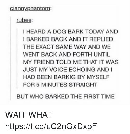 Memes, Time, and Today: ciannyphantom:  rubee  I HEARD A DOG BARK TODAY AND  I BARKED BACK AND IT REPLIED  THE EXACT SAME WAY AND WE  WENT BACK AND FORTH UNTIL  MY FRIEND TOLD ME THAT IT WAS  JUST MY VOICE ECHOING AND I  HAD BEEN BARKIG BY MYSELF  FOR 5 MINUTES STRAIGHT  BUT WHO BARKED THE FIRST TIME WAIT WHAT https://t.co/uC2nGxDxpF