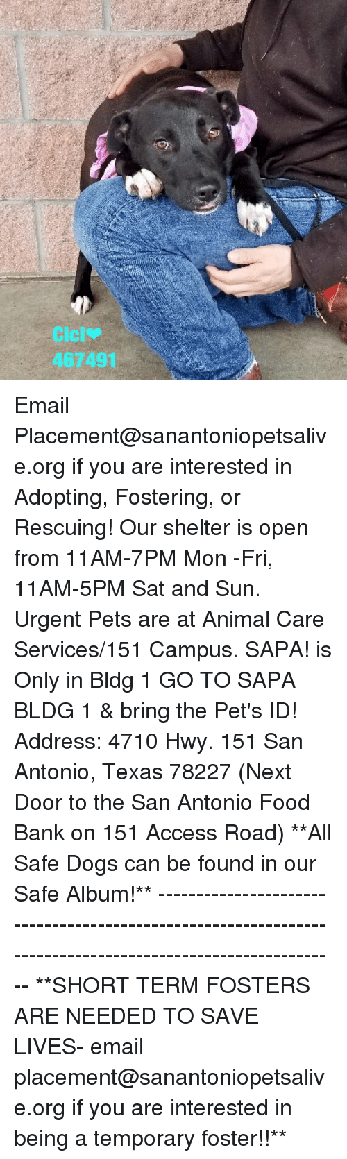 Dogs, Food, and Memes: Cici  467491 Email Placement@sanantoniopetsalive.org if you are interested in Adopting, Fostering, or Rescuing!  Our shelter is open from 11AM-7PM Mon -Fri, 11AM-5PM Sat and Sun.  Urgent Pets are at Animal Care Services/151 Campus. SAPA! is Only in Bldg 1 GO TO SAPA BLDG 1 & bring the Pet's ID! Address: 4710 Hwy. 151 San Antonio, Texas 78227 (Next Door to the San Antonio Food Bank on 151 Access Road)  **All Safe Dogs can be found in our Safe Album!** ---------------------------------------------------------------------------------------------------------- **SHORT TERM FOSTERS ARE NEEDED TO SAVE LIVES- email placement@sanantoniopetsalive.org if you are interested in being a temporary foster!!**