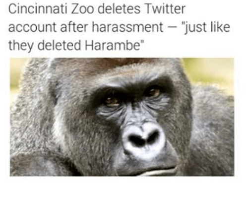 Twitter, Dank Memes, and Accounting: Cincinnati Zoo deletes Twitter  account after harassment  just like  they deleted Harambe""
