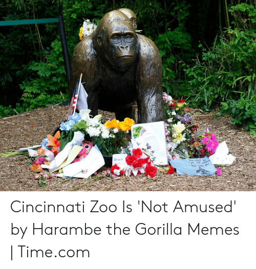 Gorilla Memes: Cincinnati Zoo Is 'Not Amused' by Harambe the Gorilla Memes | Time.com
