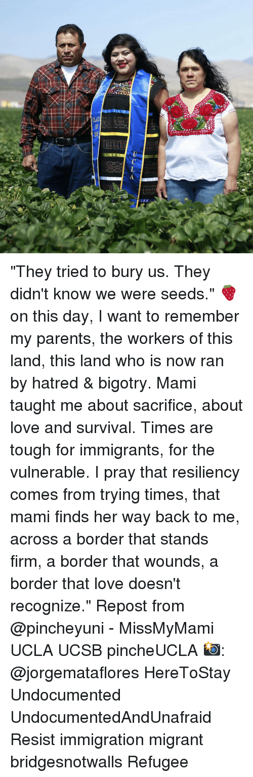 "Hatre: CLA ""They tried to bury us. They didn't know we were seeds."" 🍓 on this day, I want to remember my parents, the workers of this land, this land who is now ran by hatred & bigotry. Mami taught me about sacrifice, about love and survival. Times are tough for immigrants, for the vulnerable. I pray that resiliency comes from trying times, that mami finds her way back to me, across a border that stands firm, a border that wounds, a border that love doesn't recognize."" Repost from @pincheyuni - MissMyMami UCLA UCSB pincheUCLA 📸: @jorgemataflores HereToStay Undocumented UndocumentedAndUnafraid Resist immigration migrant bridgesnotwalls Refugee"