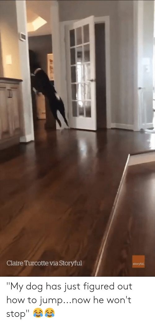 """Claire: Claire Turcotte via Storyful """"My dog has just figured out how to jump...now he won't stop"""" 😂😂"""