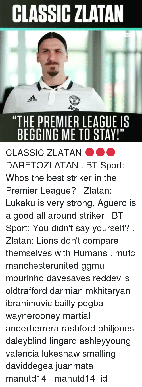 "Memes, Premier League, and Best: CLASSIC ZLATAN  ""THE PREMIERLEAGUE IS  BEGGING ME TO STAY!"" CLASSIC ZLATAN 🔴🔴🔴 DARETOZLATAN . BT Sport: Whos the best striker in the Premier League? . Zlatan: Lukaku is very strong, Aguero is a good all around striker . BT Sport: You didn't say yourself? . Zlatan: Lions don't compare themselves with Humans . mufc manchesterunited ggmu mourinho davesaves reddevils oldtrafford darmian mkhitaryan ibrahimovic bailly pogba waynerooney martial anderherrera rashford philjones daleyblind lingard ashleyyoung valencia lukeshaw smalling daviddegea juanmata manutd14_ manutd14_id"