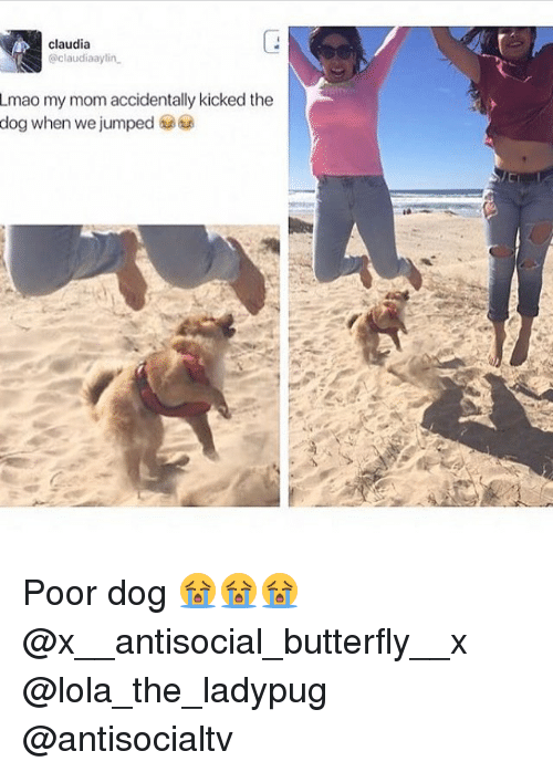 Lmao, Memes, and Butterfly: claudia  @claudiaaylin  Lmao my mom accidentally kicked the  dog when we jumped 6 Poor dog 😭😭😭 @x__antisocial_butterfly__x @lola_the_ladypug @antisocialtv