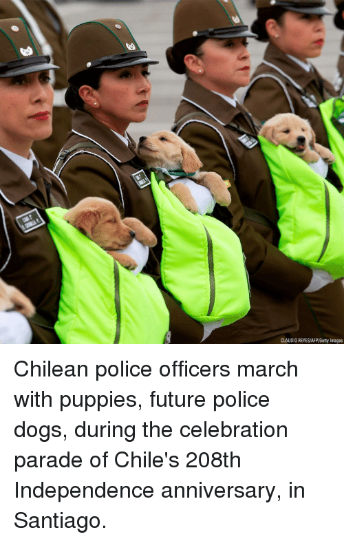 Dogs, Future, and Memes: CLAUDIO REYES/AFP/Getty Images Chilean police officers march with puppies, future police dogs, during the celebration parade of Chile's 208th Independence anniversary, in Santiago.