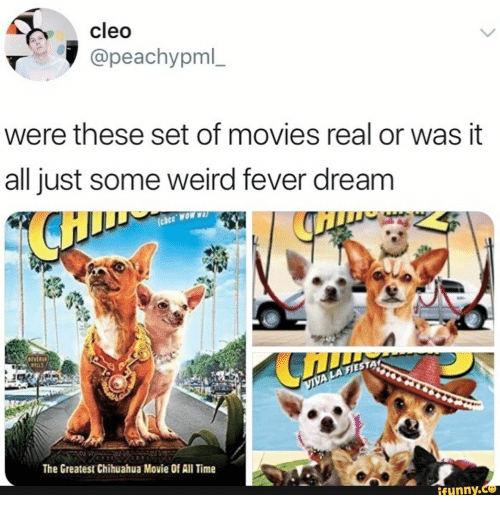 chihuahua: cleo  @peachypml_  were these set of movies real or was it  all just some weird fever dream  AMON 330  IVER  WILLS  VIVA LA FIES  The Greatest Chihuahua Movie Of All Time  ifunny.c